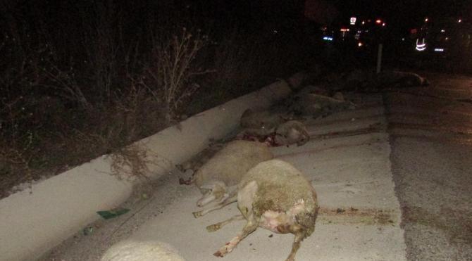 Yolcu otobüsünün çarptığı 30 koyun telef oldu