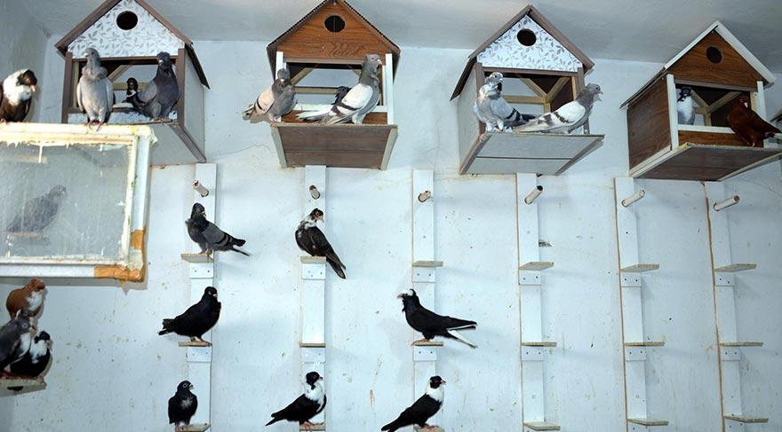 Türkiye'nin ilk güvercin oteli Diyarbakır'da açıldı