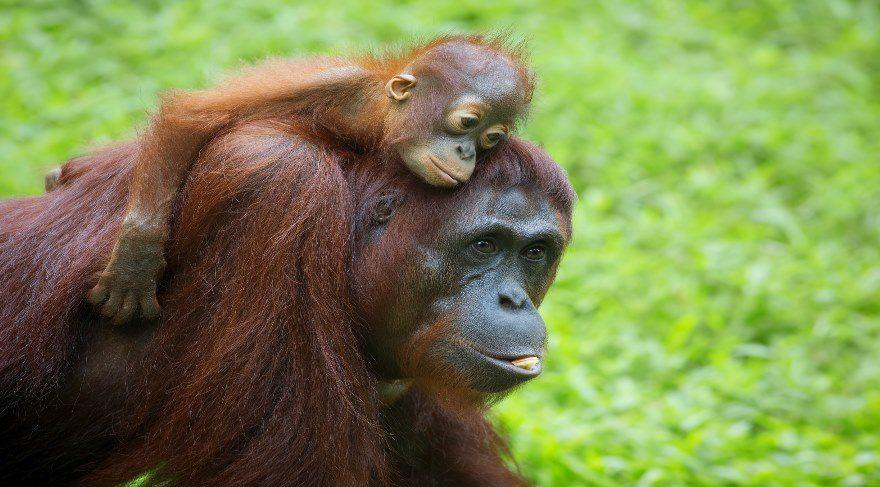 WWF 'Uyanın' diyor: Dünya, dinozorlardan bu yana en büyük kitlesel yok olma tehlikesiyle karşı karşıya