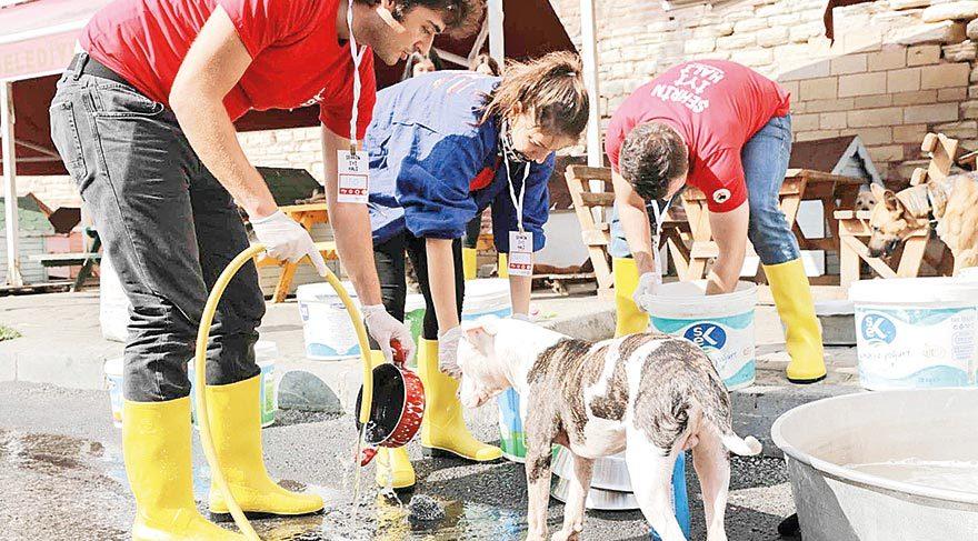 Genç gönüllüler şehirlere iyilik taşıdı