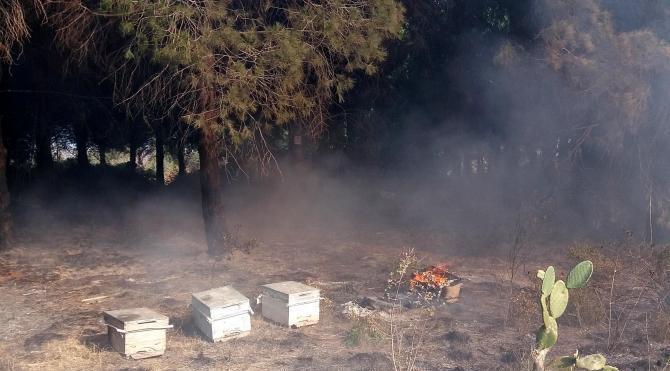 Ağaçlarla birlikte arı kovanları da yandı