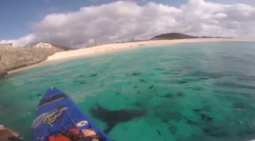 Köpekbalıklarına yem olmaktan son anda kurtuldu
