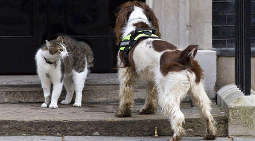 Başbakanlık binasında kedi-köpek kavgası!