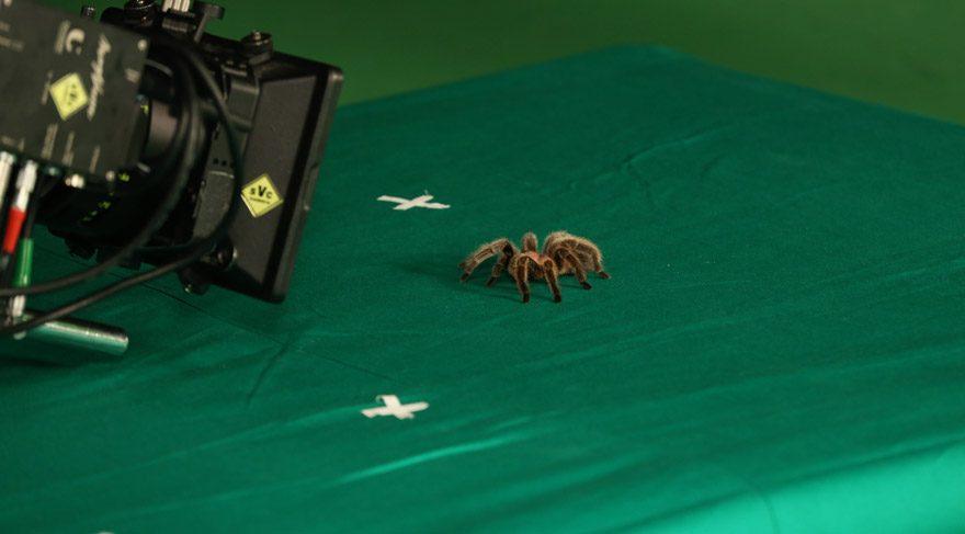 Tarantula, günde 800 TL kazanıyor!