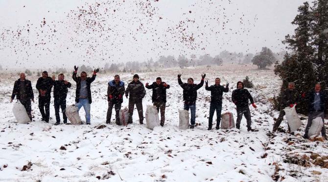 Erdemli'ye yılın ilk karı düştü, ormancılar sedir tohumu seferberliği başlattı