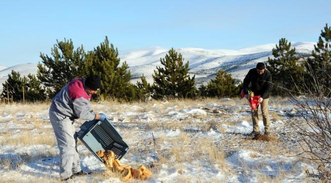 Kırşehir'de yaban hayvanları için doğaya yem bırakıldı