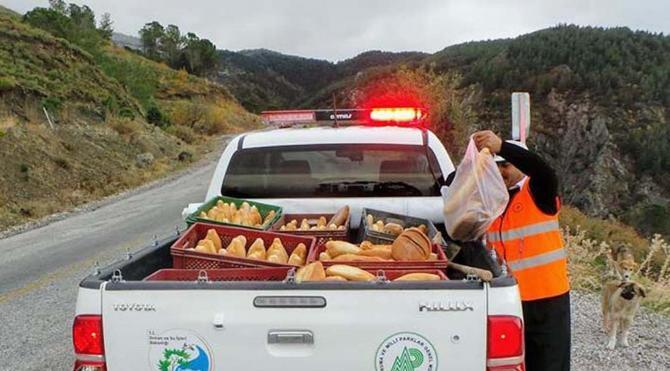 Spil'de yaban hayvanlarına yiyecek bırakıldı
