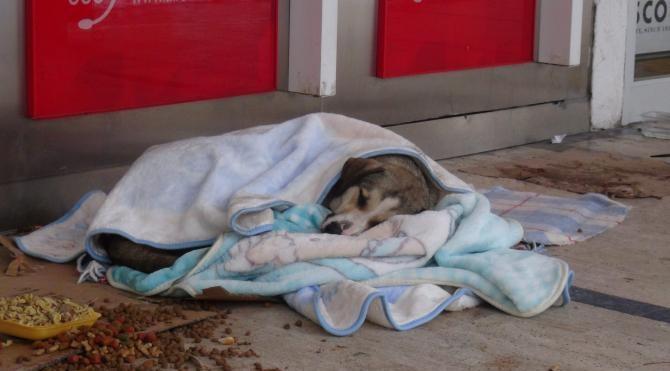 Kar altında kalan sokak hayvanlarına kucak açtılar, battaniyelere sardılar