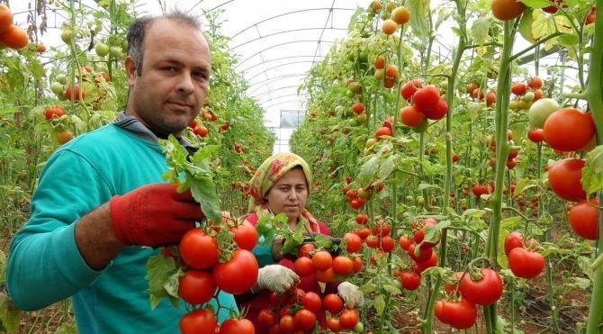 Karakış domates fiyatını 4'e katladı
