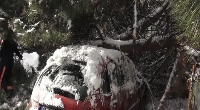 Ağaç park halindeki otomobilin üstüne devrildi