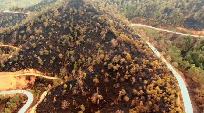 Yangında zarar gören Çamburnu ormanından iyi haber