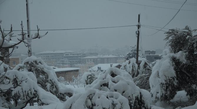20 yıl sonra gelen kar 400 bin zeytin ağacına zarar verdi