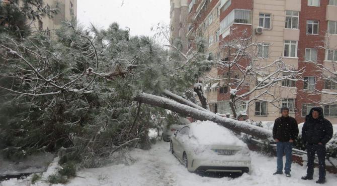 Kardan devrilen 2 ağaç araçlara zarar verdi