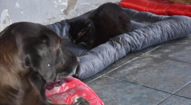 Soğuk havada kedi köpek dostluğu