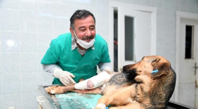 Ayağı kırılan köpeğe tedavi yavrularına bakım