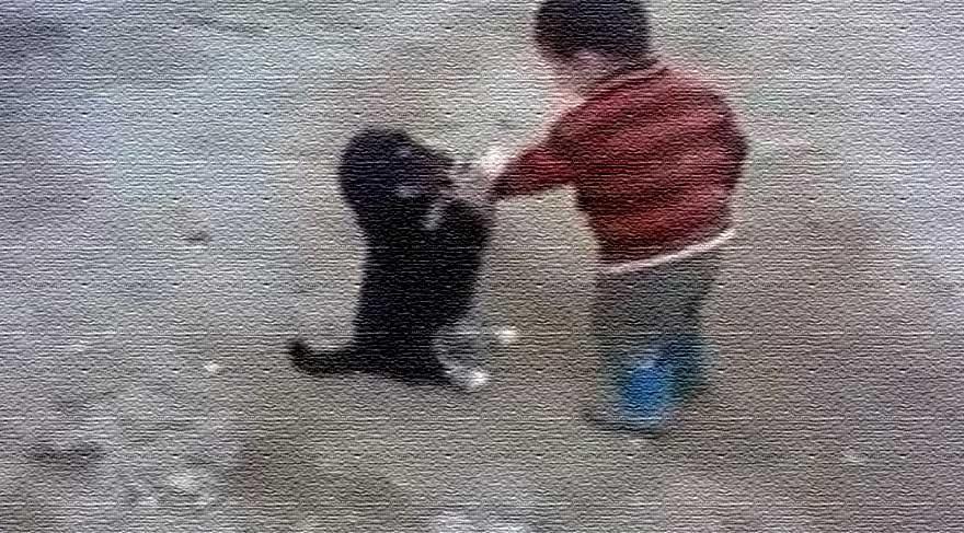 Minik köpekle minik çocuğun kavgası!