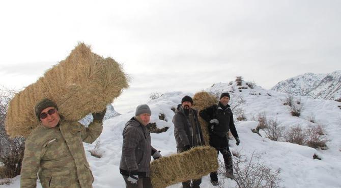 Dağ keçileri için ot bıraktılar