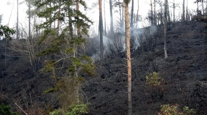 Çamburnu Tabiat Parkı'nda çıkan yangında 20 hektar sarıçam kül oldu