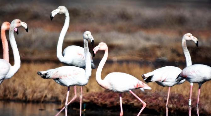Tuzla Sulak Alanı'nın 'kuş cenneti' olması için proje