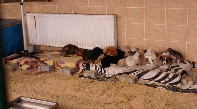 Barınaktaki hayvanlara dondurucu soğukta takviye ısıtıcı