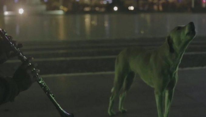 Köpeği dile getiren klarnetçi!