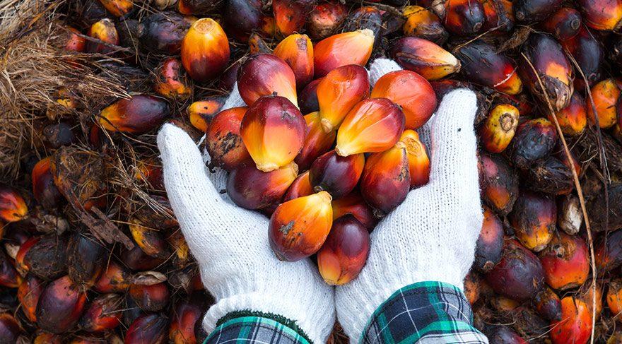 Palm yağı hangi ürünlerde kullanılıyor? Palm yağının özellikleri neler?