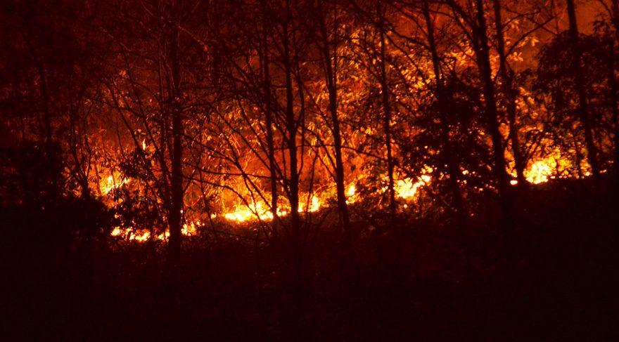 Sürmene'de orman yangını