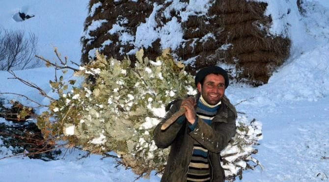 Bitlis'te köylülerin zorlu hayvan bakımı