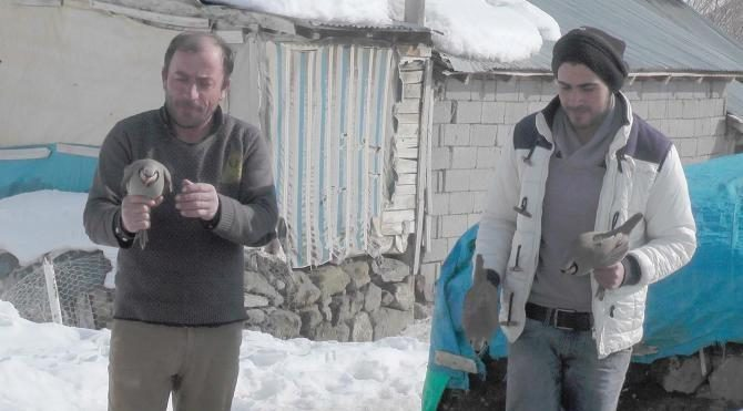Kar ve soğukta aç kalan keklikleri köylüler korumaya aldı