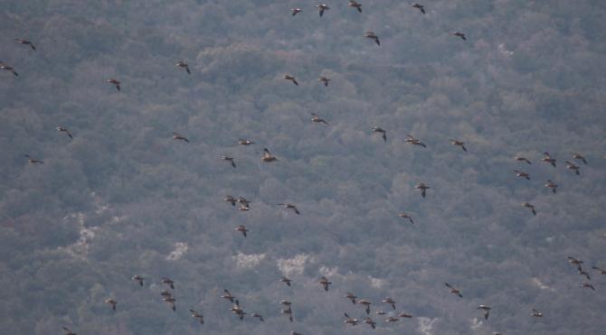 Bursa'da Kış Ortası 59 bin kuş sayıldı
