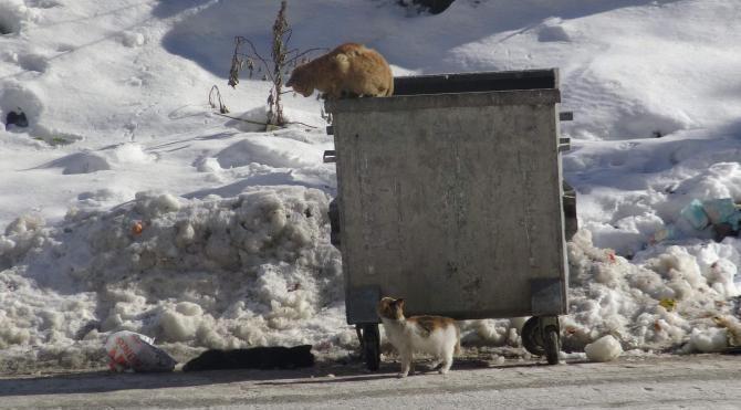 Soğuktan telef olan kedinin leşi başından diğer kediler ayrılmadı