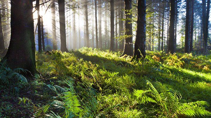 Ormanda dini tesise izin