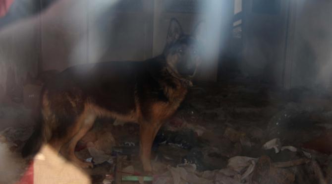 Köhne binada kilitli tutulan köpeği hayvanseverler kurtardı