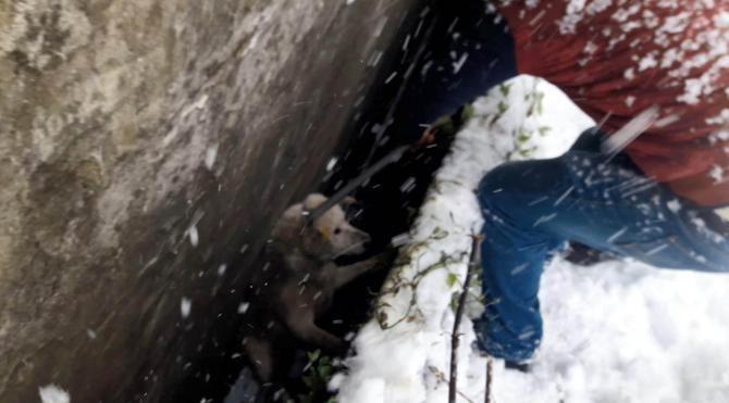 Rize'de iki bina arasındaki boşluğa düşen köpek kurtarıldı