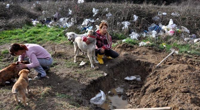 Bartın'daki hayvanseverler açlık grevini sürdürüyor