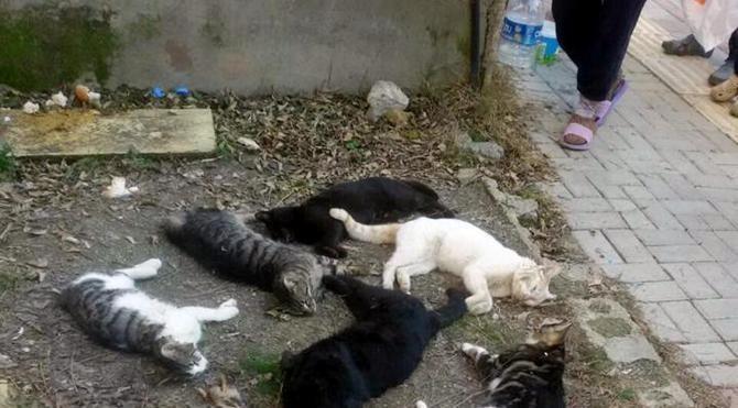 Alanya'daki kedi katliamıyla ilgili bir Rus gözaltına alındı