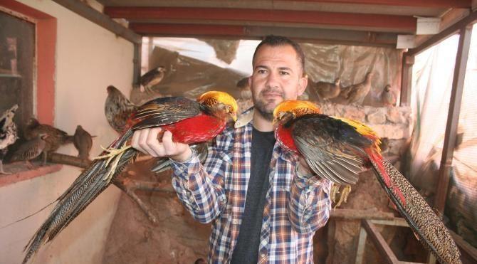 İnşaat işçisi, nesli tükenen kuşları çoğaltıp doğaya kazandırıyor