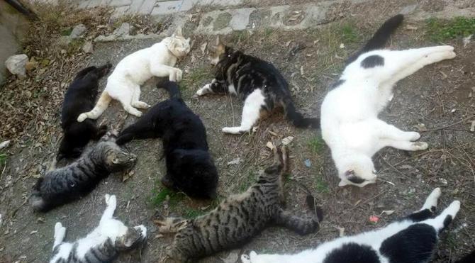 Kedi katliamında gözaltına alınan Rus serbest