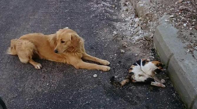 Kedi ve köpekleri tarım ilaçlı etle zehirlediler