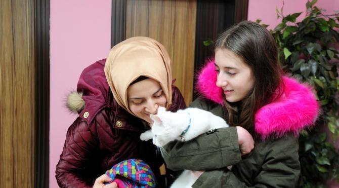 Van kedilerine 'otel' hizmeti