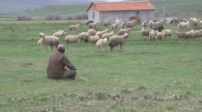 Çanakkale Birlik'ten 'Afgan Çoban' önerisi