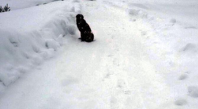 Bolu'da soğuk ve açlıktan bitkin düşen 4 köpek barınağa alındı