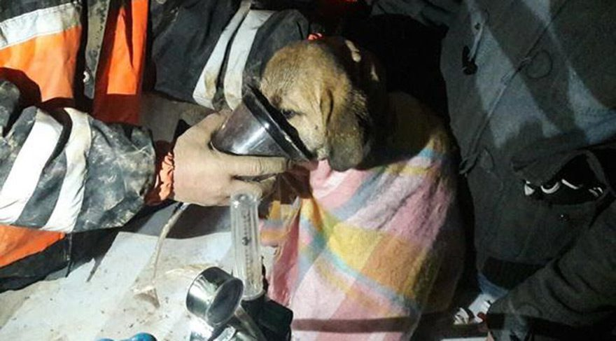 Türkiye'ye umudu hatırlatan köpek: Kuyu