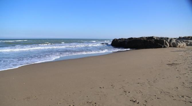 Kandıra'da sahile vuran balık kalmadı