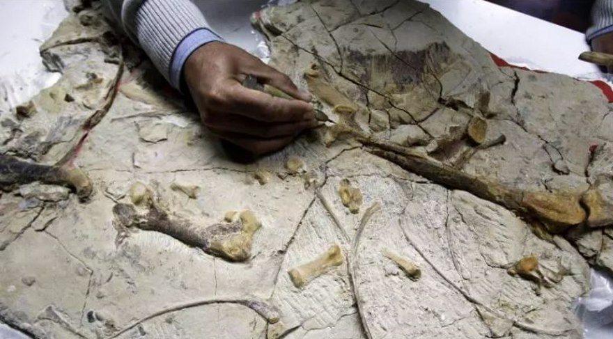 Fosil bulgularına göre devasa penguenler, 65 milyon yıl önce dinozorlarla yaşadı