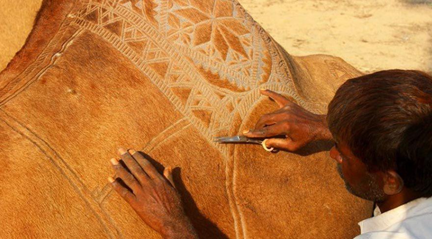 Pakistan'ın ilginç geleneği: Deve berberliği