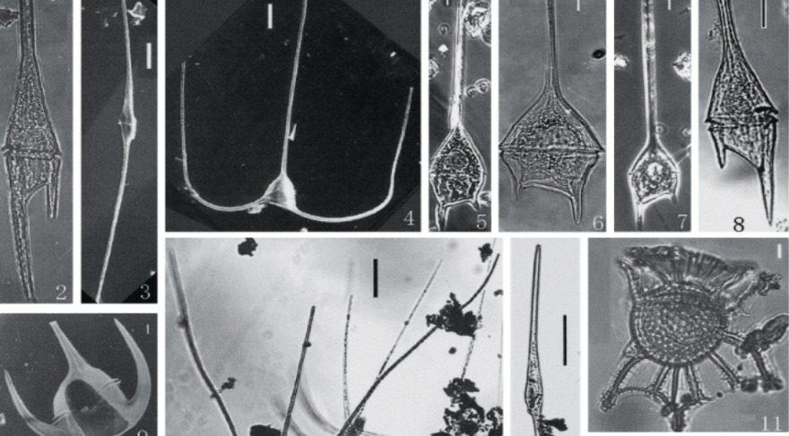 Bilim insanları, ışıldayan deniz planktonlarının genetik evrimini ilk kez haritaladı