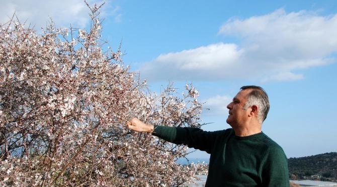 Demre'de ağaçlar çiçek açtı