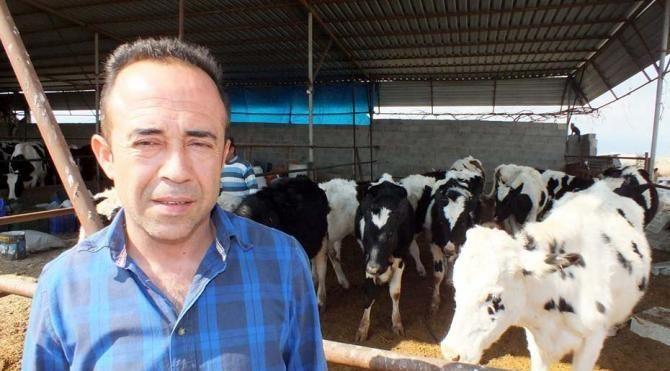 400 bin lira değerindeki 30 ineği dolandırıcıya kaptırdılar