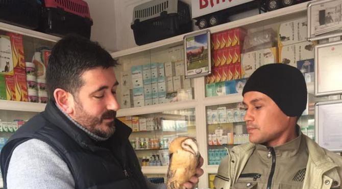 Avcıların vurduğu peçeli baykuş tedavi edildi